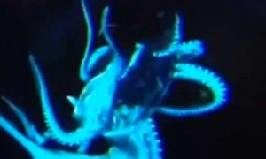 this-multi-tentacled-creature-was-spotted-2067-feet-below-the-surface-of-the-pacific-ocean