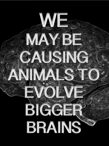 EvolveBiggerBrains